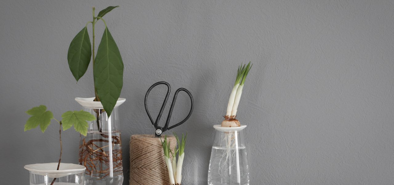 Bringing spring vibes indoors, with these DIY sprouting plates