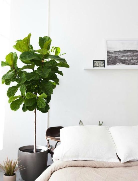 Oversized plants on Passion Shake 1