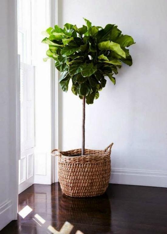 Oversized plants on Passion Shake 3