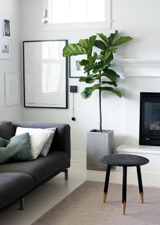 Oversized plants on Passion Shake 5