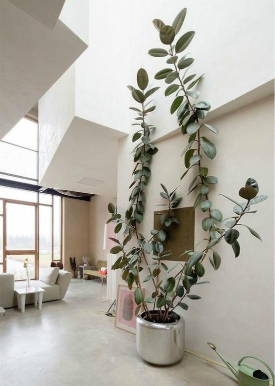 Oversized plants on Passion Shake 9