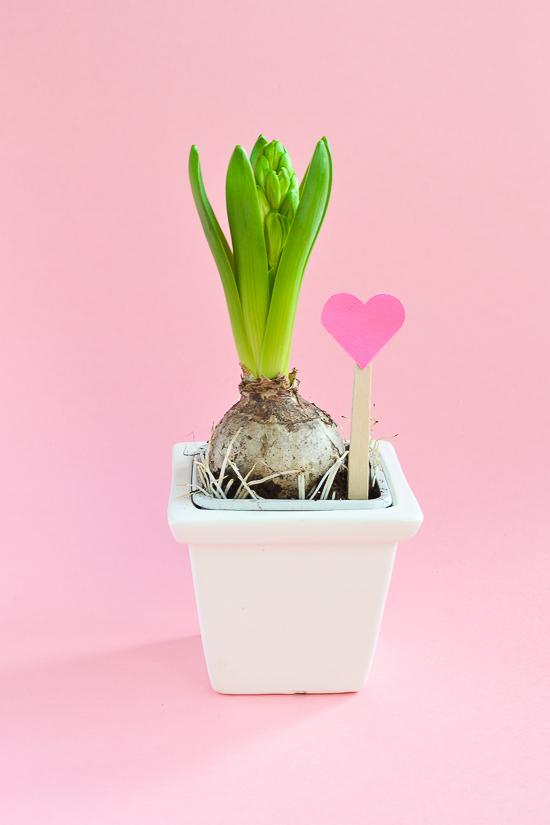 v-day plant passionshake36 (1 of 1)