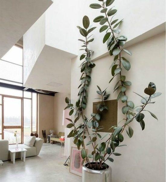 Trending : Oversized plants