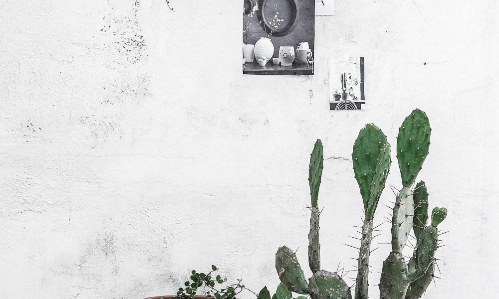 Urban Jungle Bloggers: One plant – Three stylings